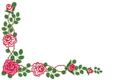 Circular vignette of roses. Decorative corner of pink climbing roses Stock Images