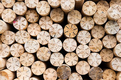 Circular wood texture pattern Stock Photography