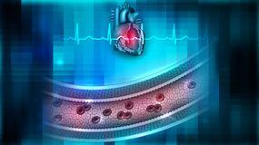 Circulatory system health. Vessel blood flow and heart anatomy abstract background, circulatory system health care concept Stock Photos