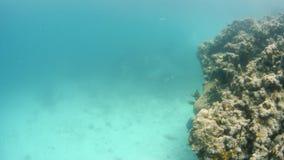 Circundar los arrecifes de coral almacen de metraje de vídeo
