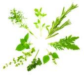 Circunde a beira das ervas frescas diferentes da especiaria/isoladas no whi Fotografia de Stock Royalty Free