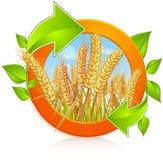 Circunde con trigo maduro stock de ilustración