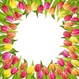 Circunde el marco con los tulipanes rojos y las flores amarillas aisladas en el fondo blanco Fotos de archivo