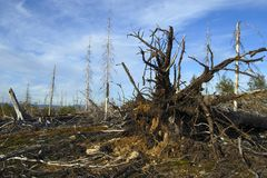 Circunstâncias ecológicas Imagens de Stock