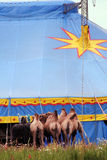 Circus Stock Photos