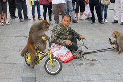 Outdoor entertainment with monkey on a bike,China Stock Image