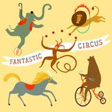 Circus animals cartoon set Stock Images