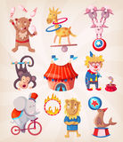 Circus animals doing tricks Stock Image