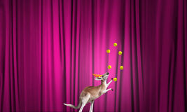 Circus animals Royalty Free Stock Photo
