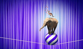 Circus animals Stock Images