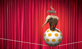 Circus animals Stock Image