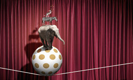 Circus animals. Standing in stack and balancing on rope Stock Image