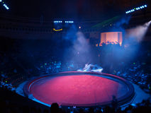Circus arena. Round circus arena is expected to yield artists Royalty Free Stock Photos