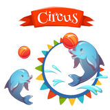 Circus banner with clever dolphin. Vector Stock Photography