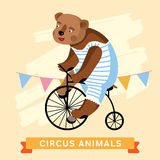 Circus Bear, vector animal series. Royalty Free Stock Image