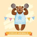 Circus Bear, vector animal series. Royalty Free Stock Images