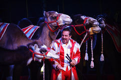 Circus Camels Royalty Free Stock Image