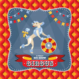 Circus card with a poodle Royalty Free Stock Images