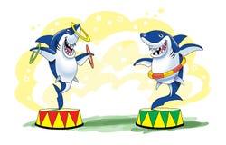 Circus cartoon shark funny picture Stock Photos