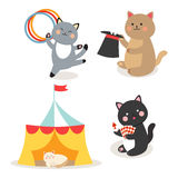Circus cats vector cheerful illustration for kids with little domestic cartoon animals playing mammal Royalty Free Stock Photography