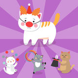 Circus cats vector cheerful illustration for kids with little domestic cartoon animals playing mammal Stock Images