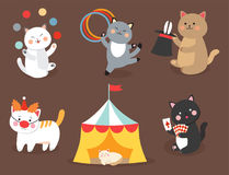 Circus cats vector cheerful illustration for kids with little domestic cartoon animals playing mammal Royalty Free Stock Photo