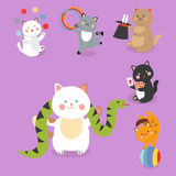 Circus cats vector cheerful illustration for kids with little domestic cartoon animals playing mammal Stock Photography