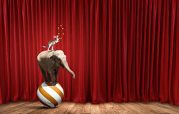 Circus in city. Circus animals standing in stack and balancing on ball stock images