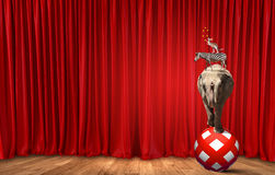 Circus in city. Circus animals standing in stack and balancing on rope Royalty Free Stock Photos