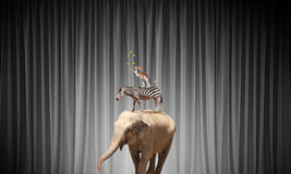 Circus in city. Circus animals standing in stack and balancing on rope Stock Photo