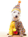 Circus Clown Dog Stock Photography
