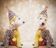 Circus Clown Dogs Royalty Free Stock Photo