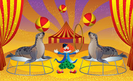 The circus with the clown and seals. Arena of the circus with the clown and seals playing in the ball Stock Image