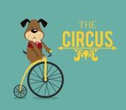 Circus design Stock Photos