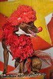 Circus dog Stock Photo