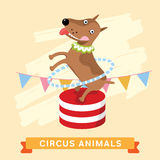 Circus Dog, vector animal series. Royalty Free Stock Photography