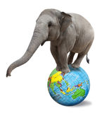 Circus elephant. Balancing on a big colorful globe isolated on white background Royalty Free Stock Photography