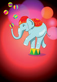 Circus elephant balancing on stand Royalty Free Stock Photography