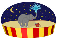 Circus elephant. Funny circus scene with an elephant, background with star and moon stock illustration