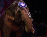 Circus elephant Stock Image