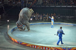 Circus elephant tricks. Elephant stunts in the Ringling Bros. and Barnum & Bailey Circus, August 2011 royalty free stock photography