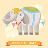 Circus Elephant, vector animal series. Stock Images