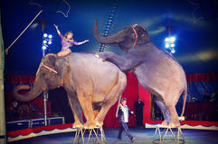 Circus Elephants Stock Photography