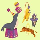 Circus funny animals vector cheerful zoo entertainment magician performer carnival illustration Royalty Free Stock Photos