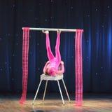 Circus juggler Royalty Free Stock Photo