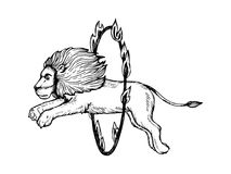 Circus lion jumps into fire ring engraving vector. Circus lion jumps into ring of fire engraving vector illustration. Scratch board style imitation. Black and Royalty Free Stock Photos