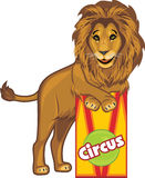 Circus lion Stock Image