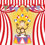 Circus monkey juggling Royalty Free Stock Photo