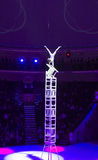Circus number. Circus acrobat performing a number Royalty Free Stock Photography
