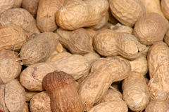 Monkey nuts Royalty Free Stock Images